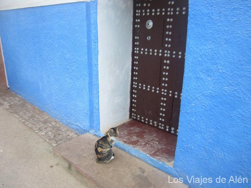 Gato De La Kasbah De Rabat