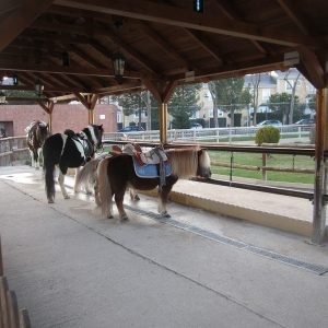 Ponys Parque Europa