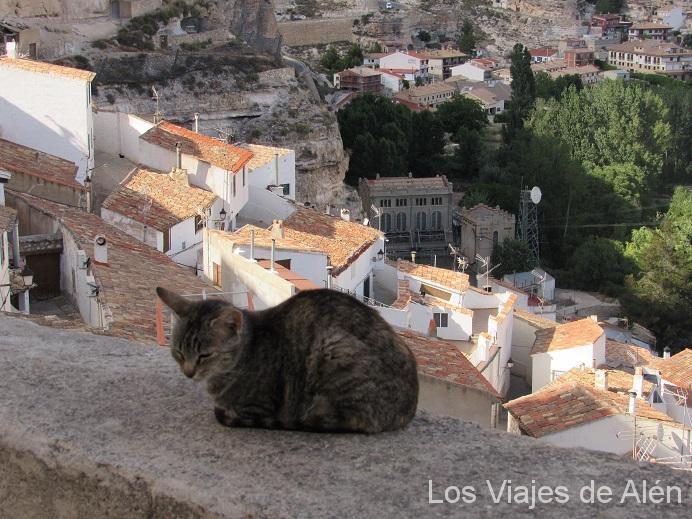 Los Gatos Eran Los Dueños Y Señores De La Parte Alta Del Pueblo