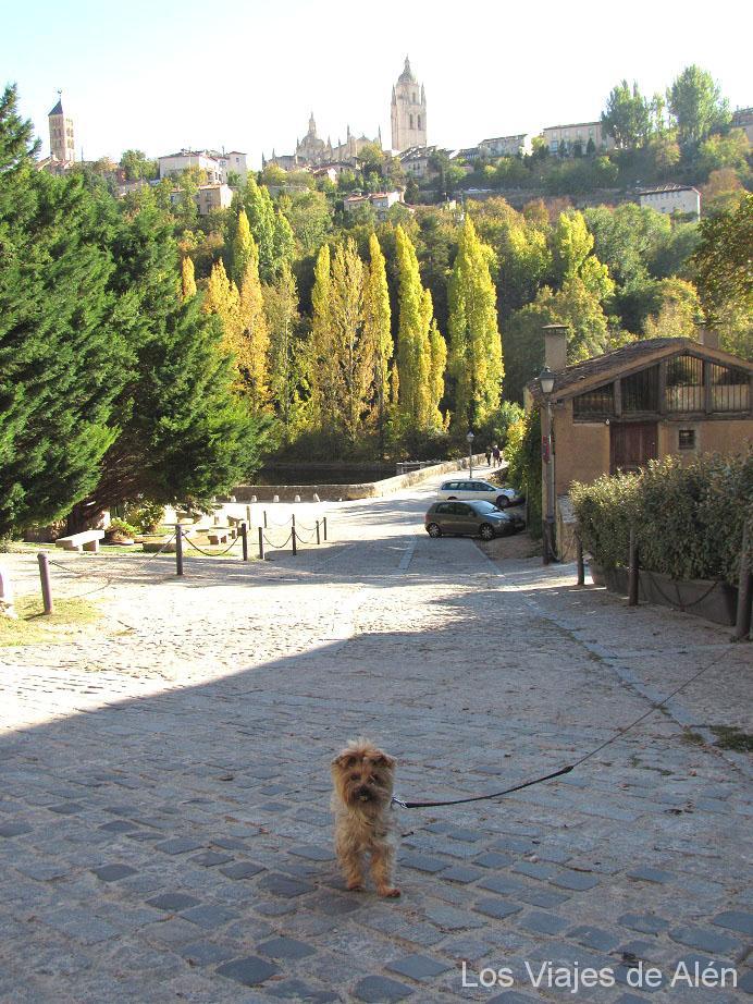 nuestra perrita Lola subiendo por la Calle Parral. Al fondo las vistas de la Catedral de Segovia