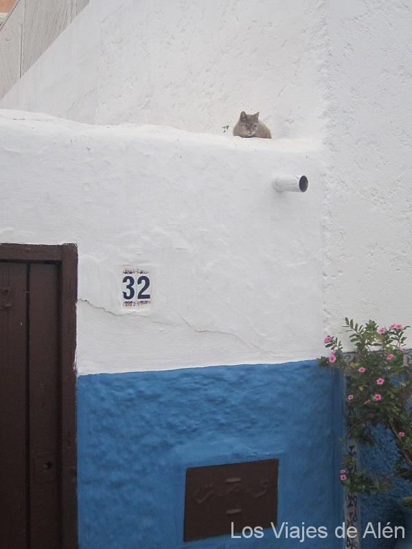 Otro, Vigilando A Los Pocos Turistas Que Merodeábamos Por Esas Calles