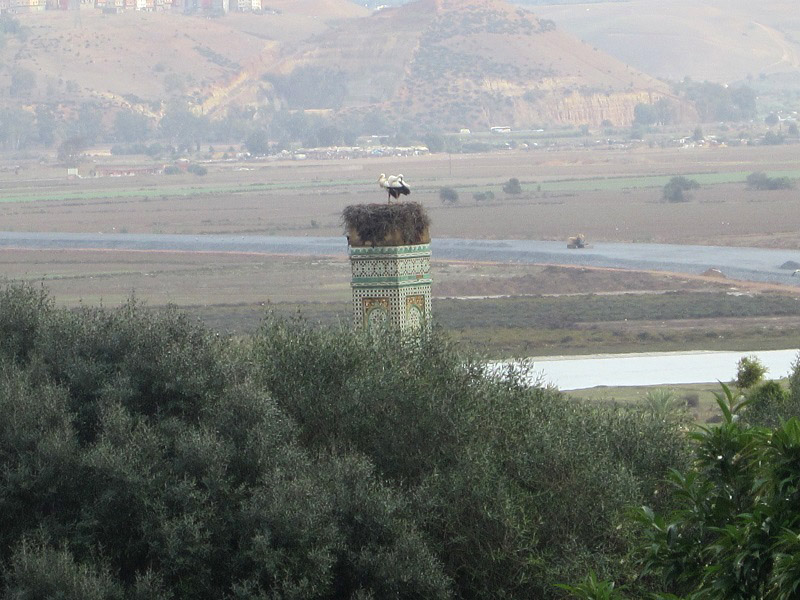 Cigüeñas En Chellah Rabat