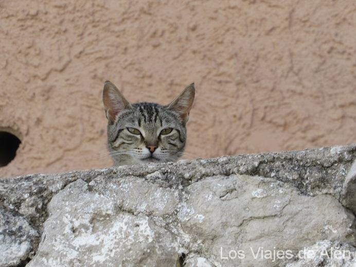 Aquí Está El Vigilante Del Castillo