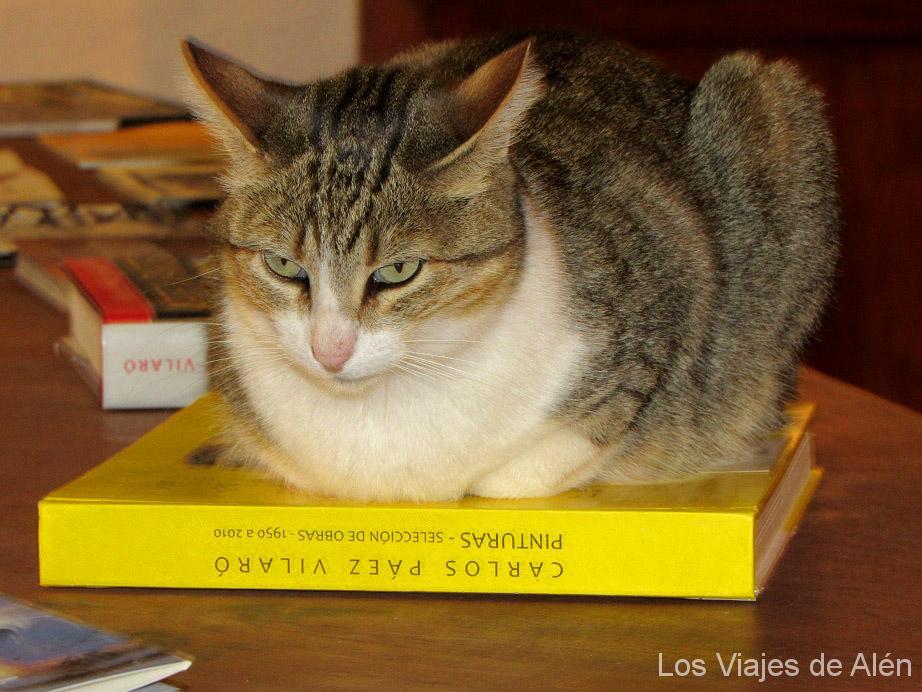 Gato Sobre Libro Ph